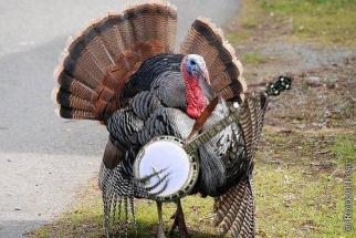 turkey playing banjo