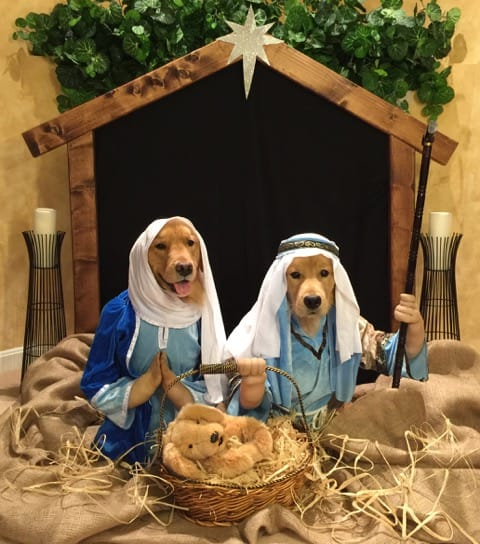 Winners 2014 Fidose Dog Holiday Photo Contest Fidose Of