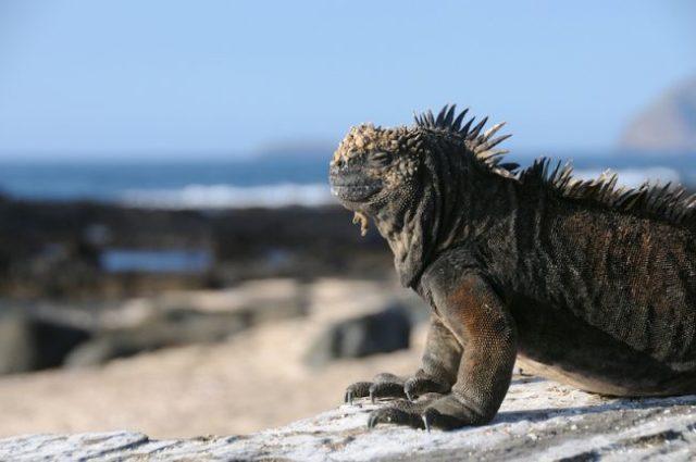 Le isole Galapagos sono un piccolo arcipelago di isole vulcaniche appartenenti all'Ecuador nell'Oceano Pacifico orientale.