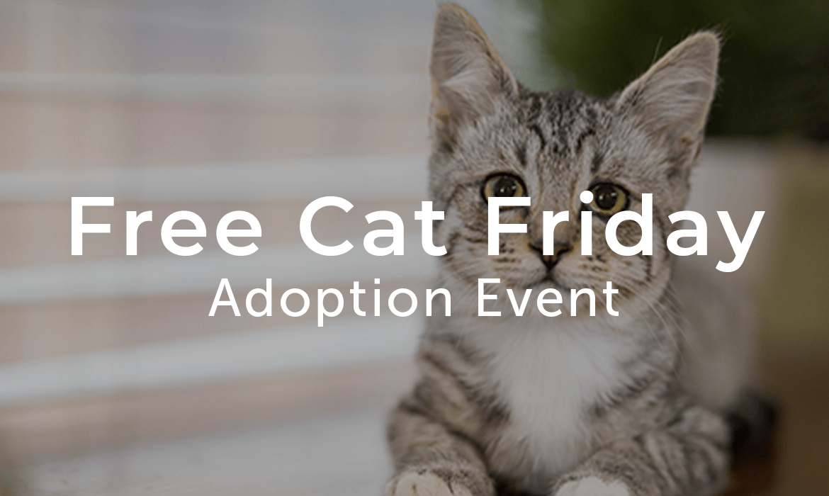 Free Cat Friday Adoption Event