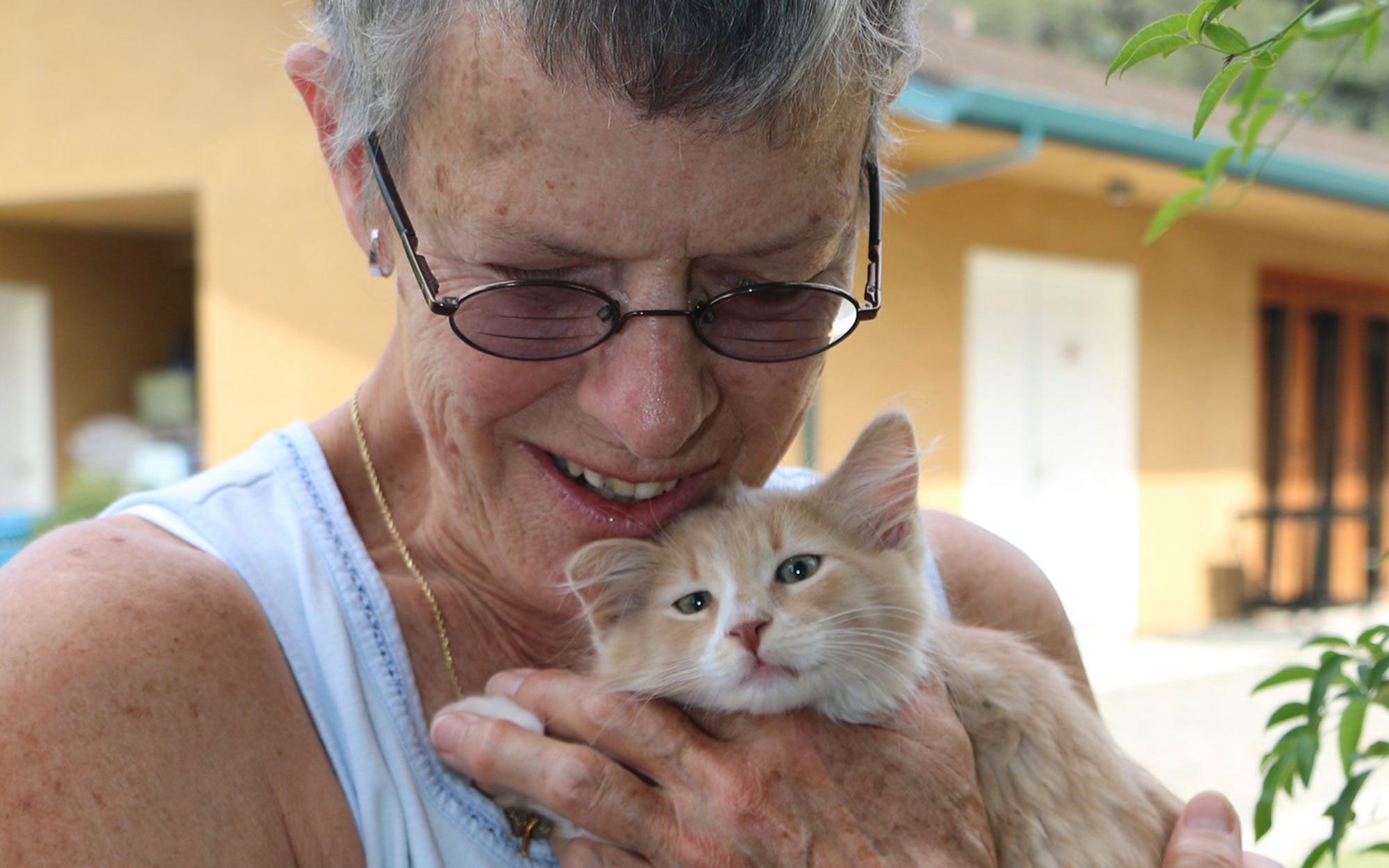 A volunteer holding an orange tabby kitten
