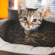 Adoptable Camp Fire Cats