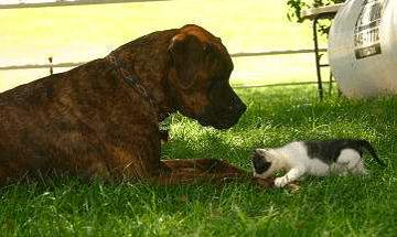 """FieldHaven residents Bracken and Dana are """"Kitten Friendly"""""""