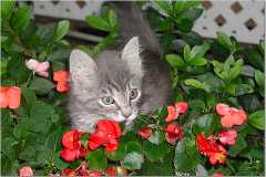 newsletter-spring-2006-snap-3_240x160