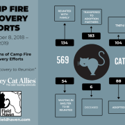 Six Months of Camp Fire Cat Recovery Efforts