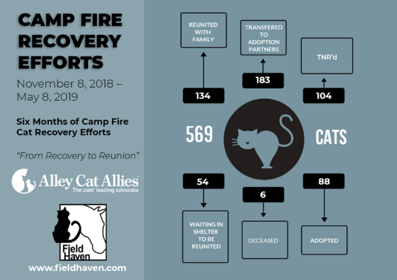 Camp Fire Recovery Efforts, November 8 2018 to May 8 2019. Six months of Camp FIRE Recovery efforts. 134 cats reunited with family, 183 cats transferred to adoption partners, 104 cats TNR'd, 54 cats waiting in shelter to be reunited, 6 cats deceased, and 88 cats adopted. 569 total cats.