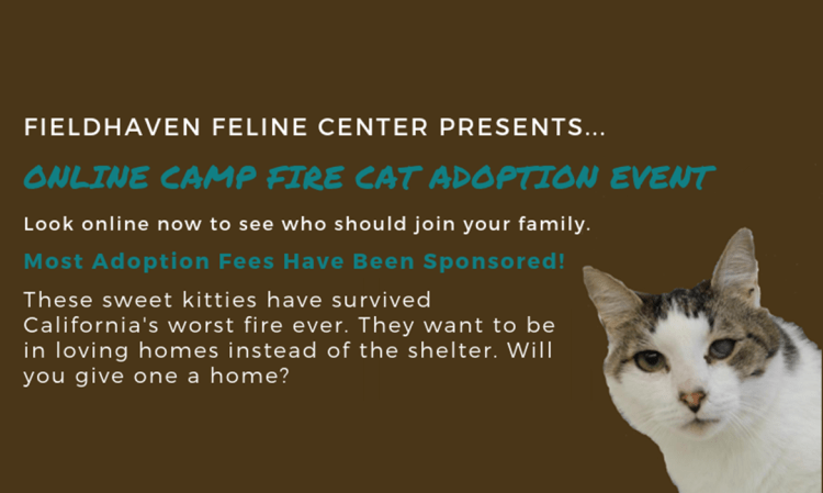 Camp Fire Cat Survivors are Looking for Love