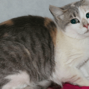 FieldHaven Celebrates National Feral Cat Day: Phantom's Story