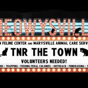 TNR the Town