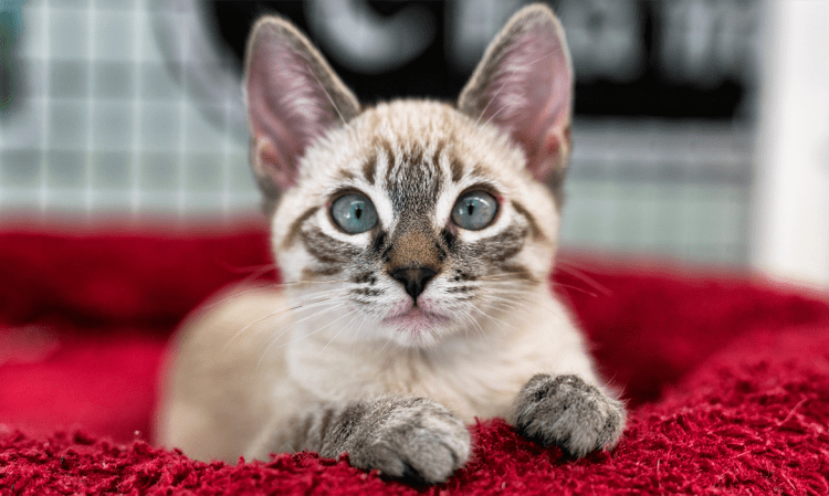 How You Can Help Your Anxious Kitty Relax