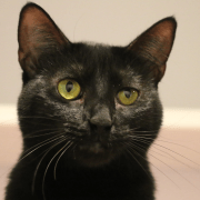 Tara and Turbo are Looking for a Home for the Holidays