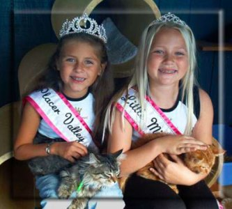 Two young girls holding a tabby cat and an orange tabby.
