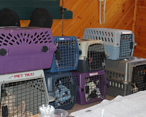 A group of cat carriers as part of evacuation efforts