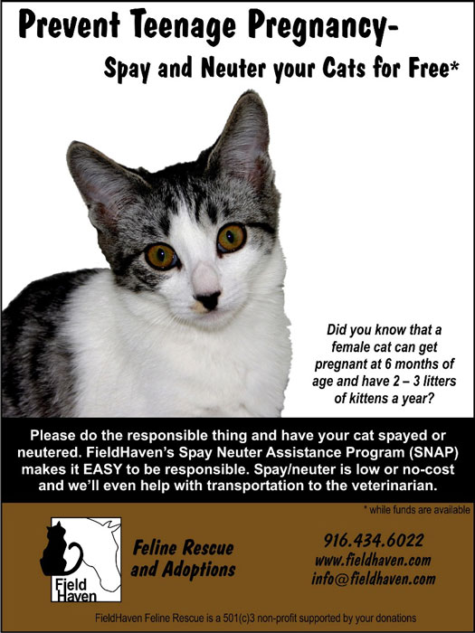 FieldHaven's poster for preventing teenage feline pregnancy, as a female can become pregnant at six months of age.