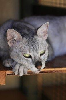 A grey tabby resting on a ledge.