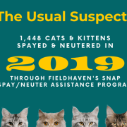 1,448 Cats and Kittens are Missing a Little Something…