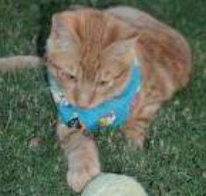 Garfield, an orange tabby.