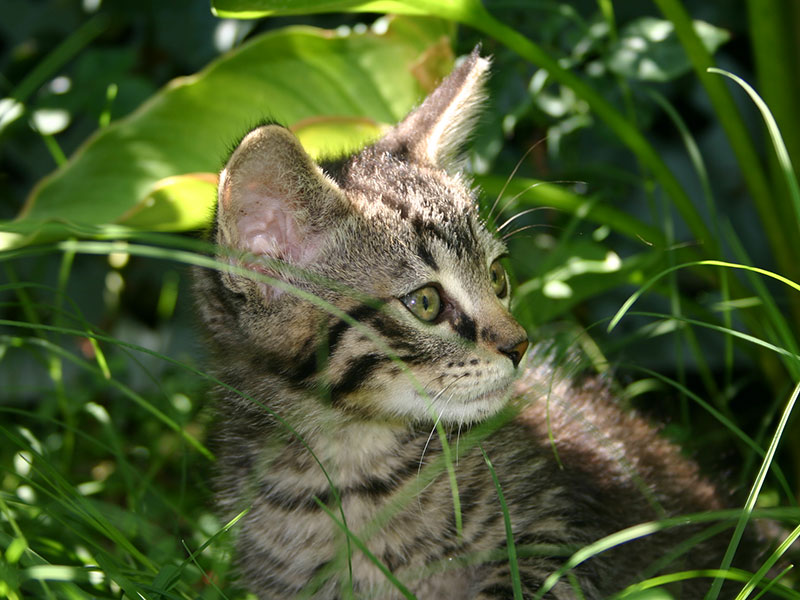 A tabby kitten rescued from Operation: Amoruso.