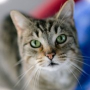 COVID-19: FieldHaven Still Helping Cats and Their People