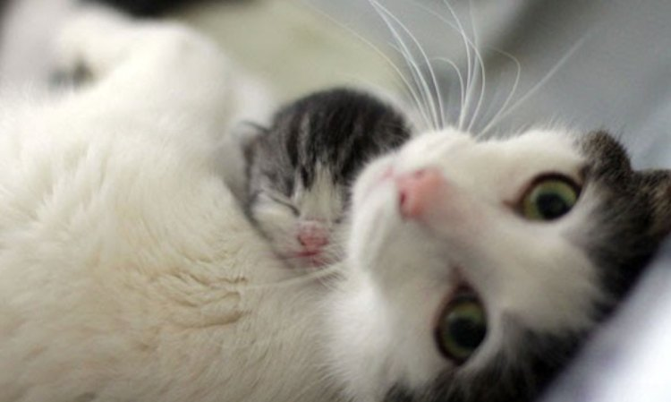 Mothers and Kittens Need Your Help Right Now!