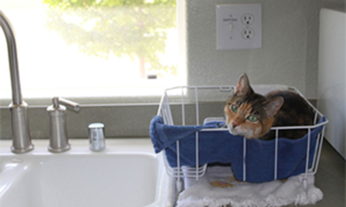 Hot Rod, a calico cat, sitting in the dish rack.