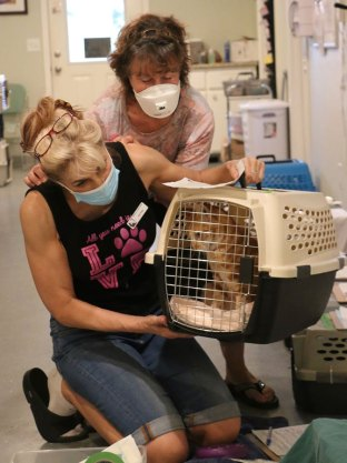 Two volunteers work to help a cat.