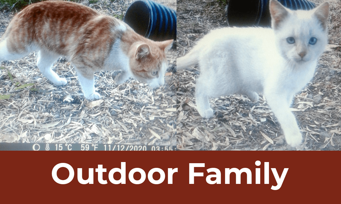 12 Saves of Christmas – Outdoor Family – FieldHaven's Heartwarming Save #7