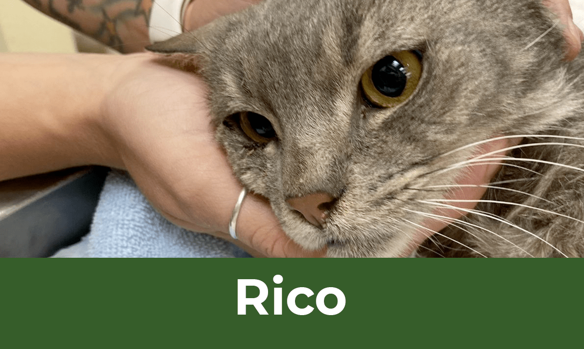 12 Saves of Christmas – Rico – FieldHaven's Heartwarming Save #8