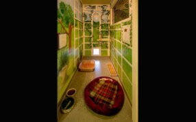 Inside one of FieldHaven's cat rooms.