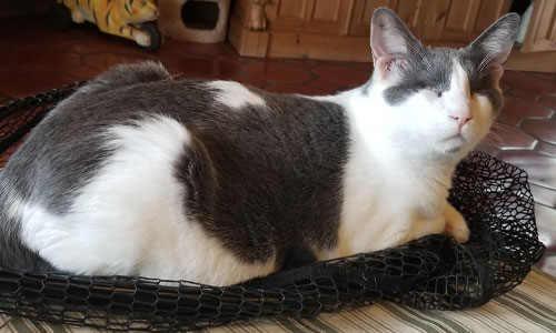 FieldHaven's spokescat Champy sitting on his bed.