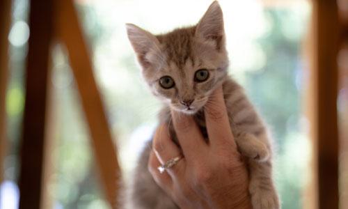 A kitten being held in loving hands.