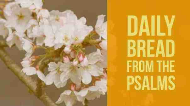 Praying Psalm 23 Daily Devotional