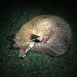 The FOX DIARY-March