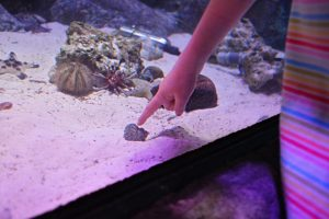 SEALIFE Kansas City