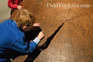 State Historical Museum of Iowa child counting tree rings