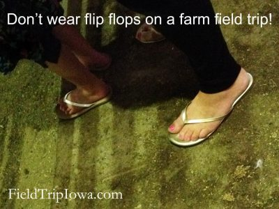 flip flops in a horse barn are a big no-no1