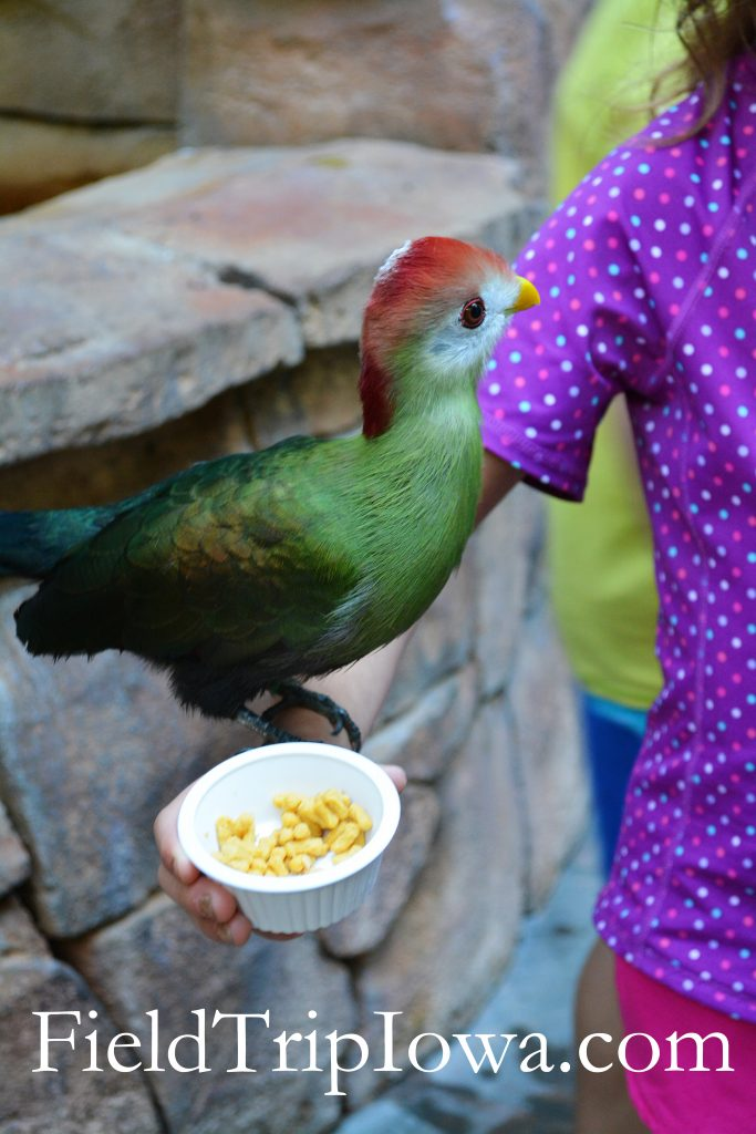 A bird resting on a girls arm as she feed it at Discovery Cove Florida