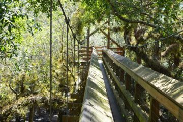 The Canopy Walkway at Myakka River State Park in Florida.