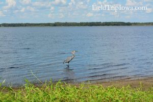 A crane on the edge of the lake at Myakka River State Park in Florida.