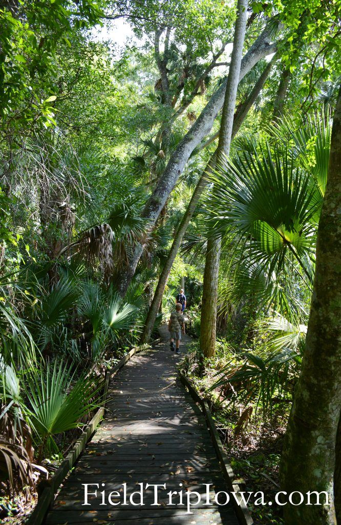 Wooden board walks make some parts of the trail easier at Ocala National Forest Alexander Springs Timucuan Indian Nature Trail