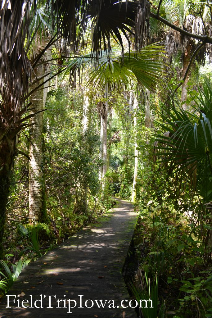 Lots of shady paths at Ocala National Forest Alexander Springs Timucuan Indian Nature Trail