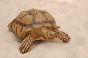 Our kids saw this Turtle in the lobby when we were checking in. Read more at Family Review of Discovery Cove Florida