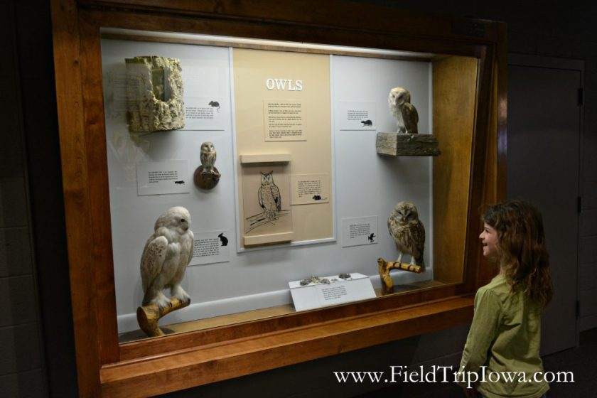 Owl display at Grout Museum District in Waterloo Iowa.