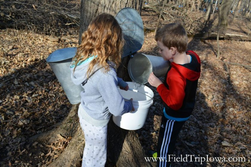 Children collecting maple sap at Hartmand Reserve Nature Center in Cedar Falls Iowa.