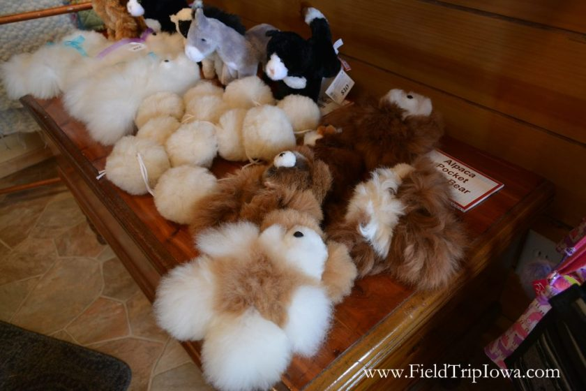 Teddy bears made from baby alpaca wool in gift shop at Hidden Paradise Alpacas Farm in IL