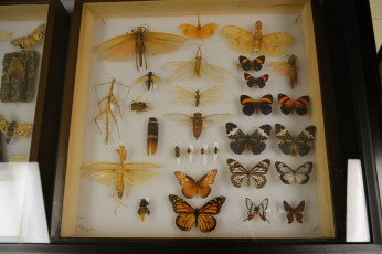 so many beautiful insects