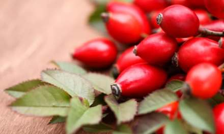 Natural Extract May Prevent Breast Cancer Common in Black Women