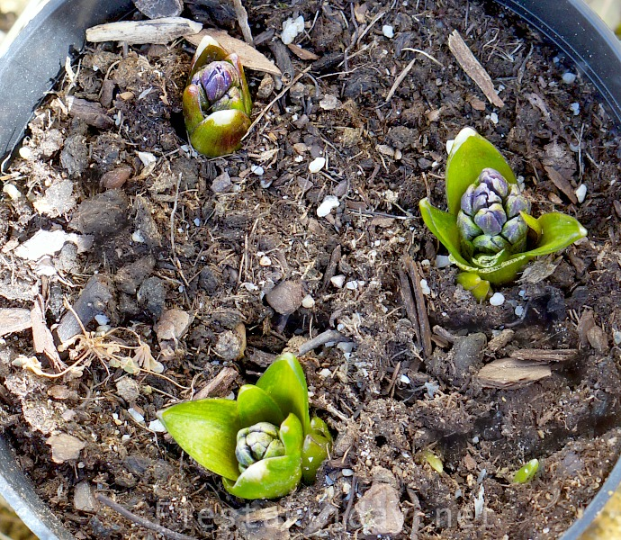 Sprouting Into Spring | FiestaFriday.net