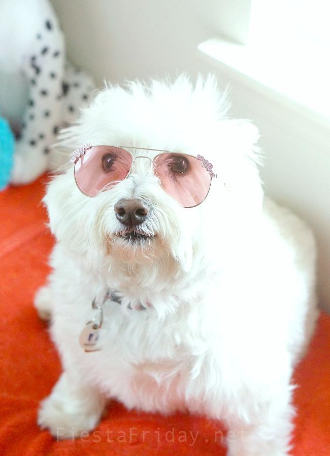 Skye the Fashionista #westie #westhighlandterrier #puppylove #dog #pet