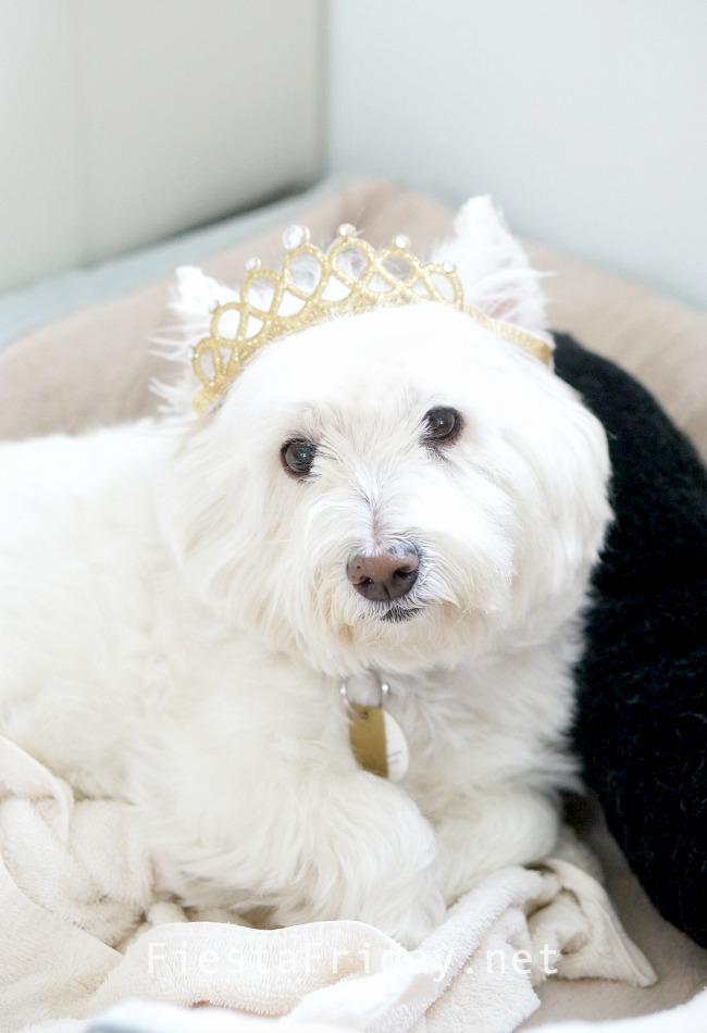 This is Princess Skye #westie #westhighlandterrier #puppylove #dog #pet
